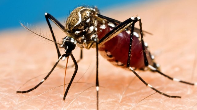Crow Tests Positive For West Nile Virus In Vilas County