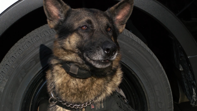 Local Police K9 is top dog in the nation