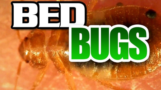 School district quarantines electronics due to bed bugs