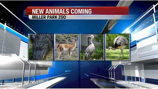 New animals coming to Miller Park Zoo