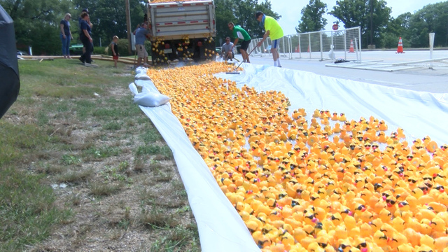 Rubber ducks signify commitments to end abuse in Central Illinois