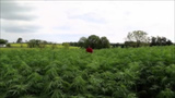 Industrial hemp forum to help start Illinois effort