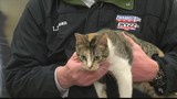 Furrever Friends Friday 3/15/19 Part 2